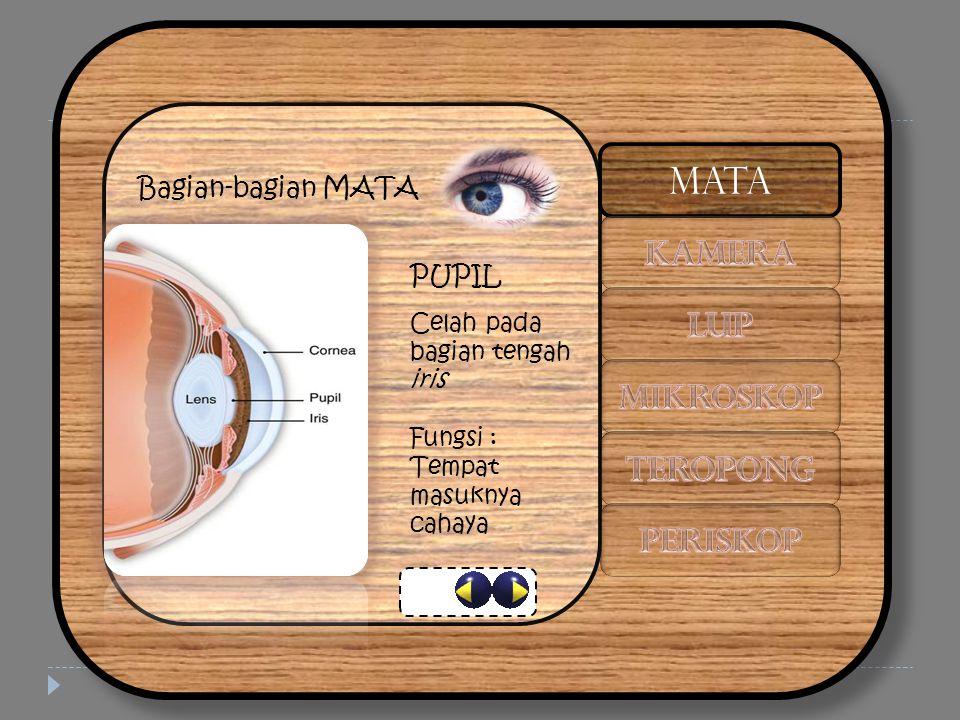 Bagian-bagian MATA LENSA Lensa cembung dari serat bening Fungsi : Membentuk bayangan nyata agar jatuh tepat di retina MATA