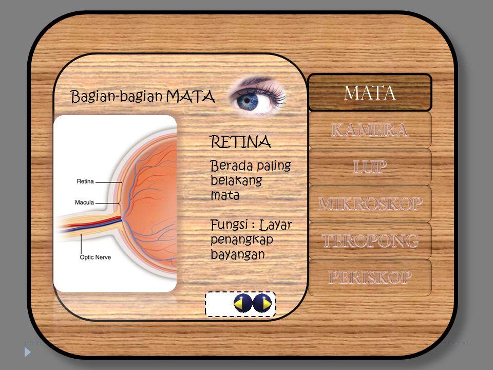 Bagian-bagian MATA RETINA Berada paling belakang mata Fungsi : Layar penangkap bayangan MATA
