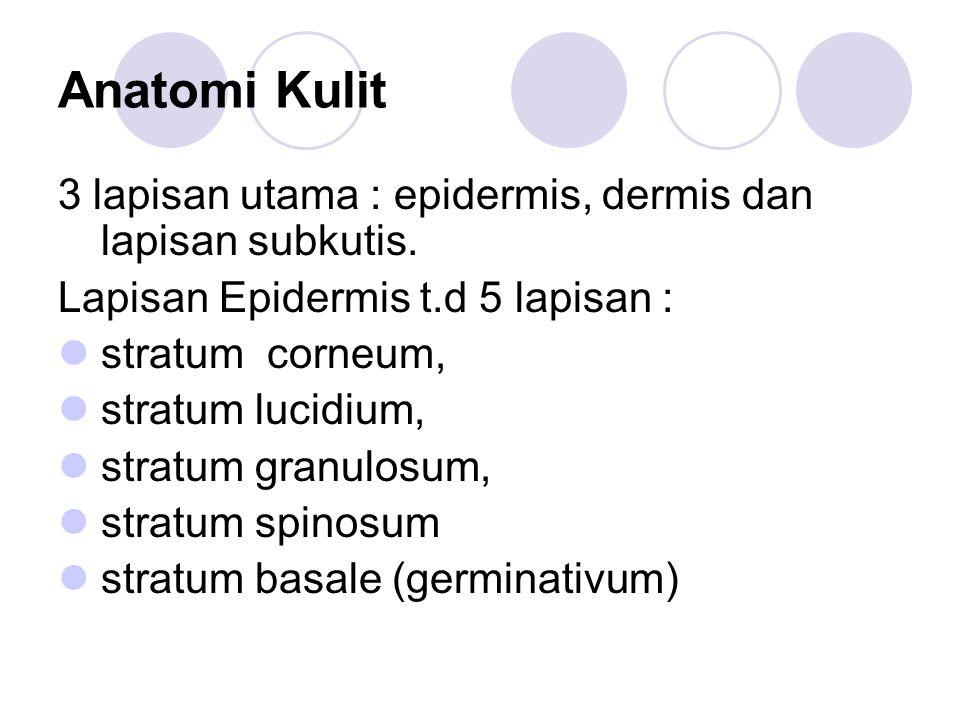 Anatomi Kulit 3 lapisan utama : epidermis, dermis dan lapisan subkutis. Lapisan Epidermis t.d 5 lapisan : stratum corneum, stratum lucidium, stratum g
