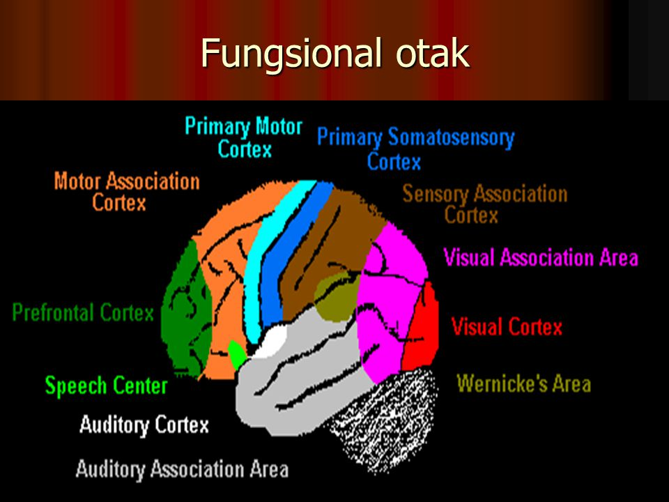 Fungsional otak