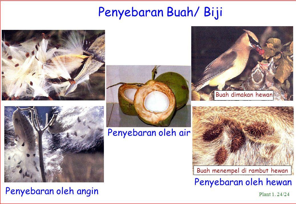 Penyebaran oleh angin Penyebaran oleh hewan Plant 1. 24/24 Penyebaran Buah/ Biji Buah dimakan hewan Penyebaran oleh air Buah menempel di rambut hewan