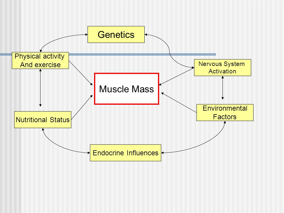 Genetics Nervous System Activation Muscle Mass Endocrine Influences Physical activity And exercise Nutritional Status Environmental Factors