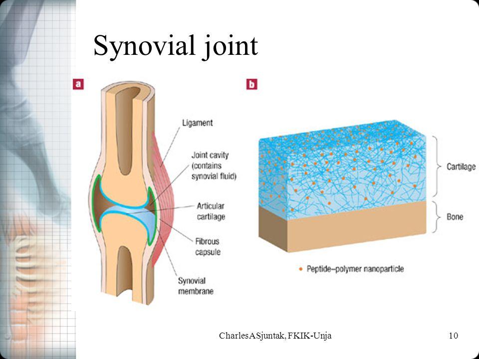 Synovial joint CharlesASjuntak, FKIK-Unja10