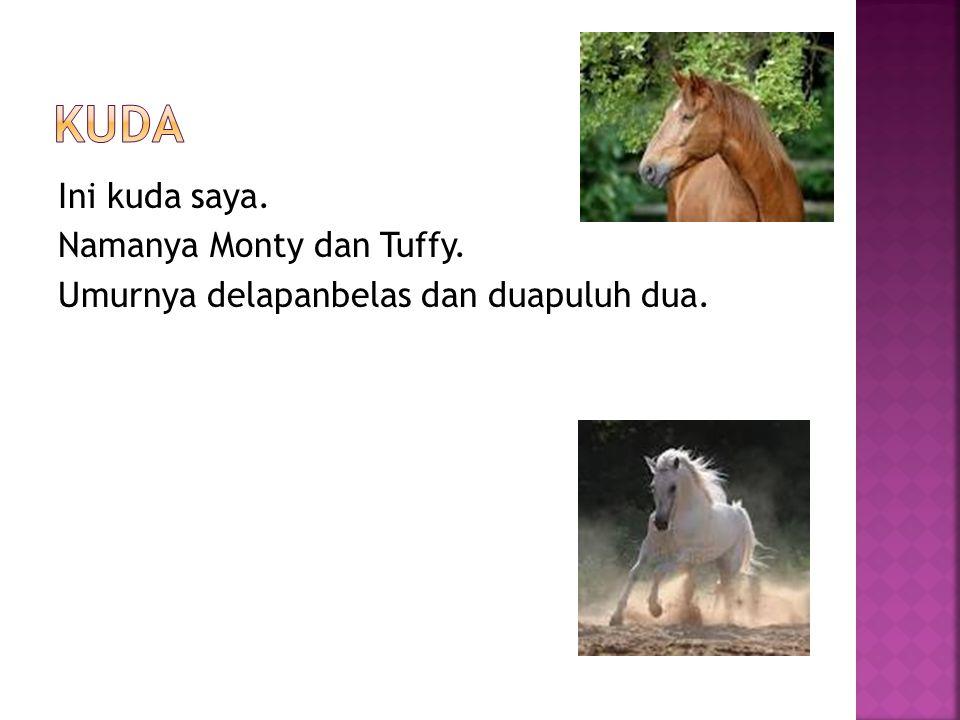 Ini kuda saya. Namanya Monty dan Tuffy. Umurnya delapanbelas dan duapuluh dua.