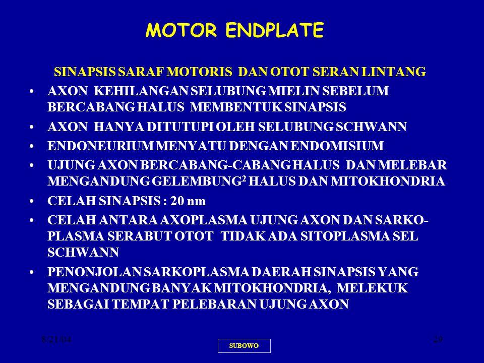 8/21/0429 MOTOR ENDPLATEMOTOR SINAPSIS SARAF MOTORIS DAN OTOT SERAN LINTANG AXON KEHILANGAN SELUBUNG MIELIN SEBELUM BERCABANG HALUS MEMBENTUK SINAPSIS