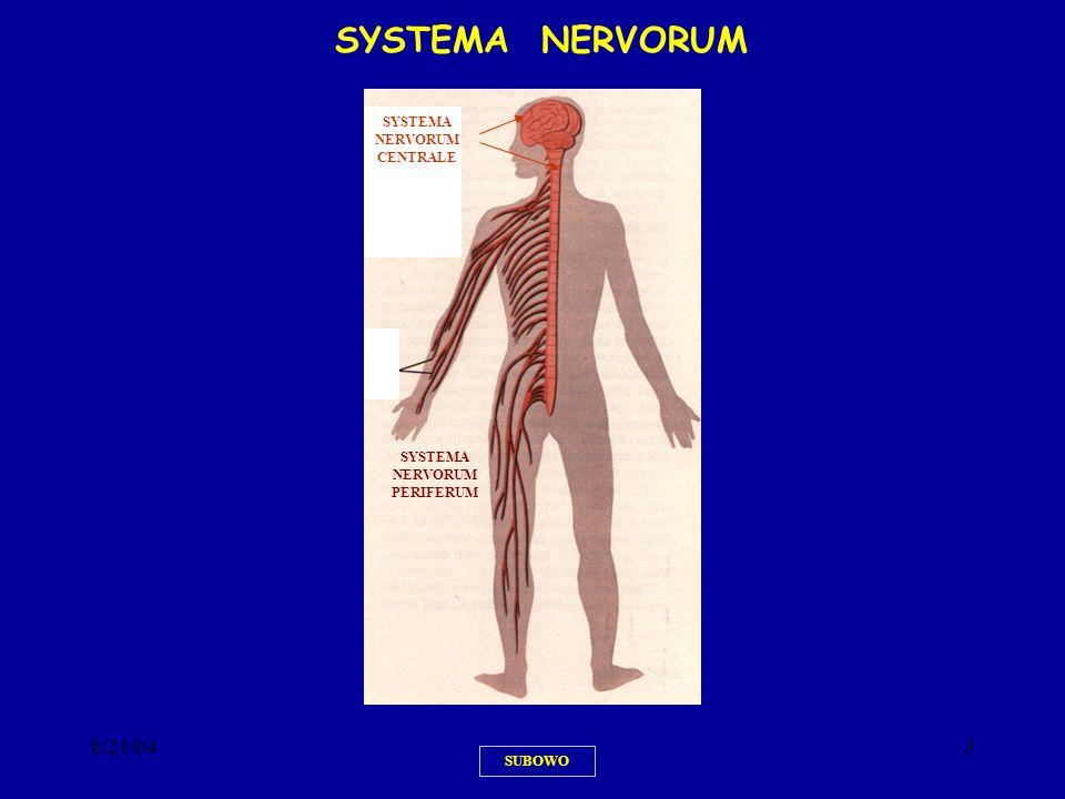 8/21/0434 SUBOWO RESEPTOR DENGAN SELUBUNG NEUROMUSCULAR SPINDLE