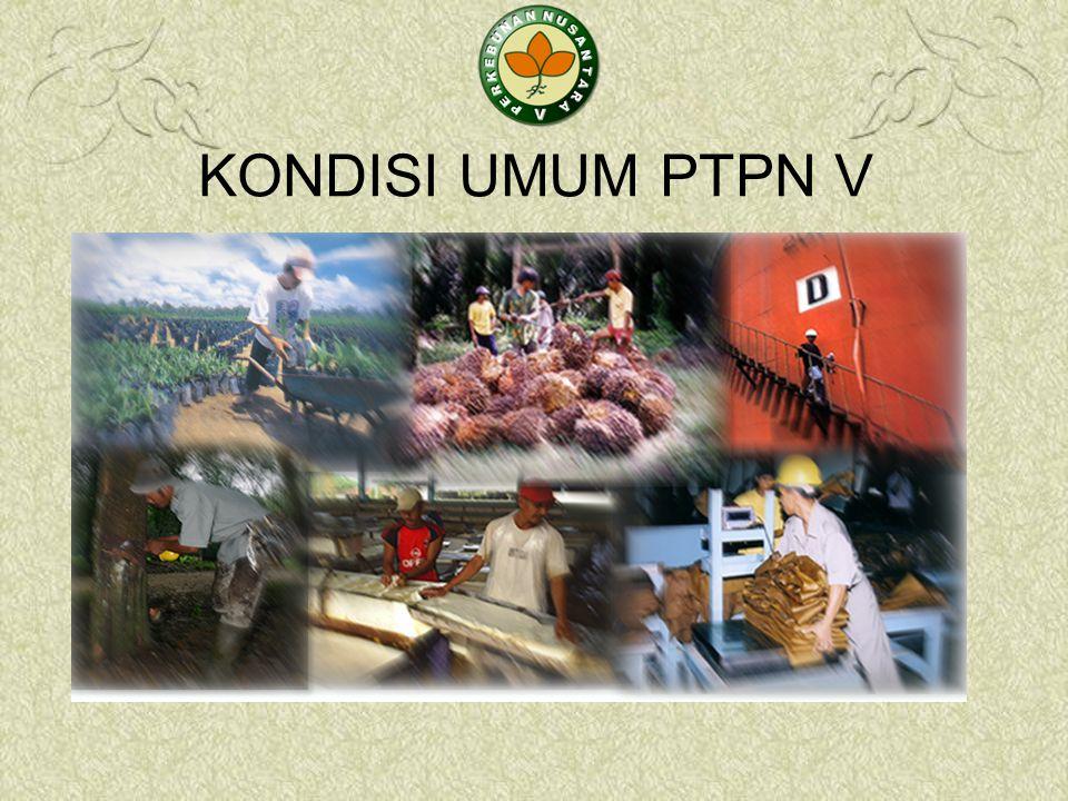 KESIMPULAN  Prospek Bisnis Kelapa Sawit Masih Sangat Menjanjikan.