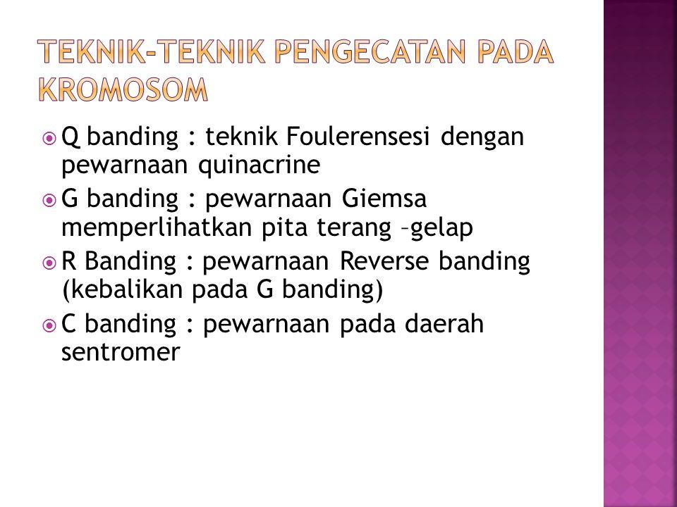  Q banding : teknik Foulerensesi dengan pewarnaan quinacrine  G banding : pewarnaan Giemsa memperlihatkan pita terang –gelap  R Banding : pewarnaan Reverse banding (kebalikan pada G banding)  C banding : pewarnaan pada daerah sentromer