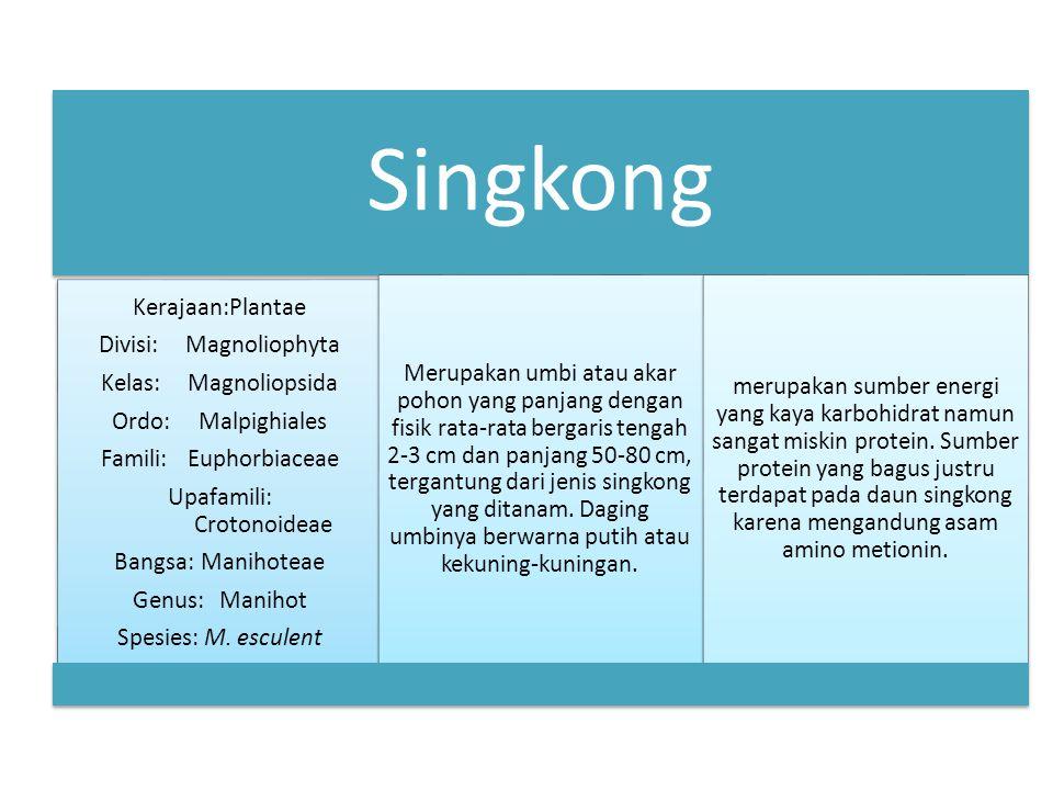 Singkong Kerajaan:Plantae Divisi:Magnoliophyta Kelas:Magnoliopsida Ordo:Malpighiales Famili:Euphorbiaceae Upafamili: Crotonoideae Bangsa:Manihoteae Genus:Manihot Spesies:M.