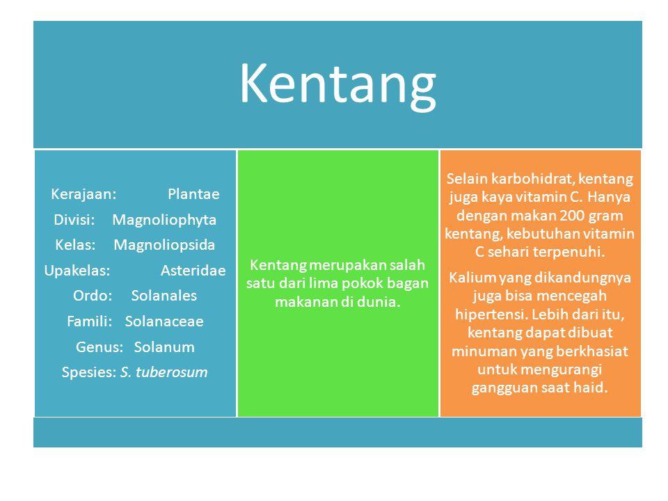 Kentang Kerajaan:Plantae Divisi:Magnoliophyta Kelas:Magnoliopsida Upakelas:Asteridae Ordo:Solanales Famili:Solanaceae Genus:Solanum Spesies:S.