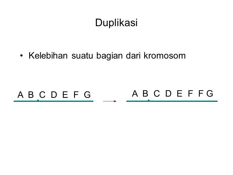 Duplikasi Kelebihan suatu bagian dari kromosom A B C D E F G A B C D E F F G