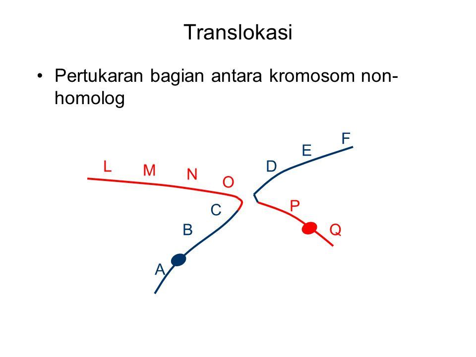 Translokasi Pertukaran bagian antara kromosom non- homolog F A B C D E L M N O P Q