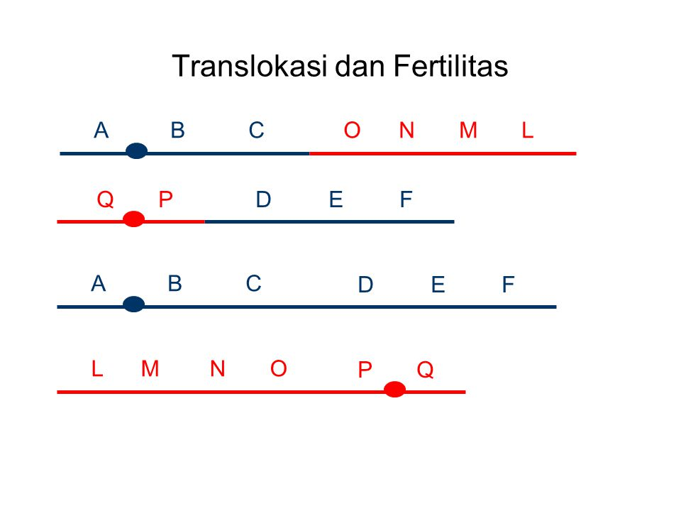 Translokasi dan Fertilitas A B C D E F O N M L Q P A B C D E F L M N O P Q