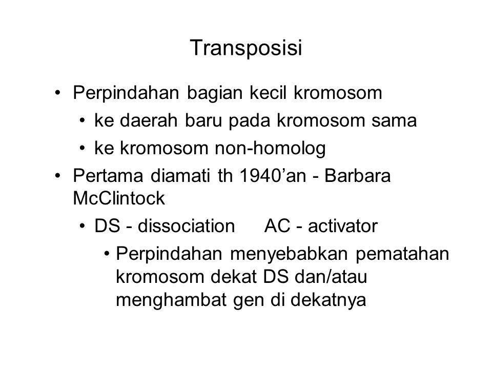 Transposisi Perpindahan bagian kecil kromosom ke daerah baru pada kromosom sama ke kromosom non-homolog Pertama diamati th 1940'an - Barbara McClintoc