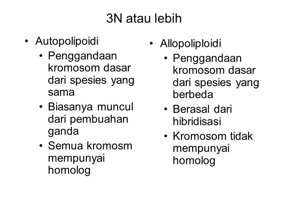 3N atau lebih Autopolipoidi Penggandaan kromosom dasar dari spesies yang sama Biasanya muncul dari pembuahan ganda Semua kromosm mempunyai homolog All
