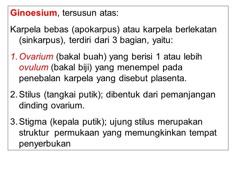 Ginoesium, tersusun atas: Karpela bebas (apokarpus) atau karpela berlekatan (sinkarpus), terdiri dari 3 bagian, yaitu: 1.Ovarium (bakal buah) yang ber