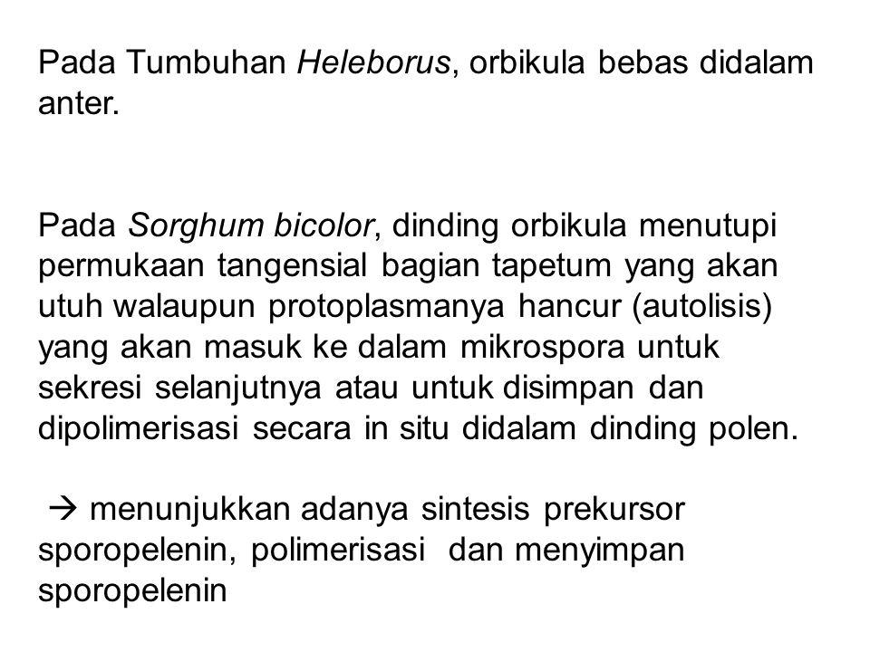 Pada Tumbuhan Heleborus, orbikula bebas didalam anter. Pada Sorghum bicolor, dinding orbikula menutupi permukaan tangensial bagian tapetum yang akan u