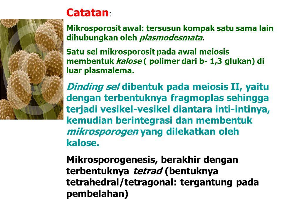 Catatan : Mikrosporosit awal: tersusun kompak satu sama lain dihubungkan oleh plasmodesmata. Satu sel mikrosporosit pada awal meiosis membentuk kalose