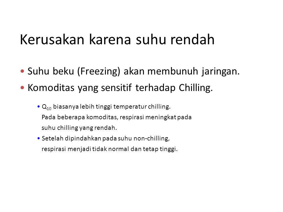 Suhu beku (Freezing) akan membunuh jaringan. Komoditas yang sensitif terhadap Chilling. Q 10 biasanya lebih tinggi temperatur chilling. Pada beberapa