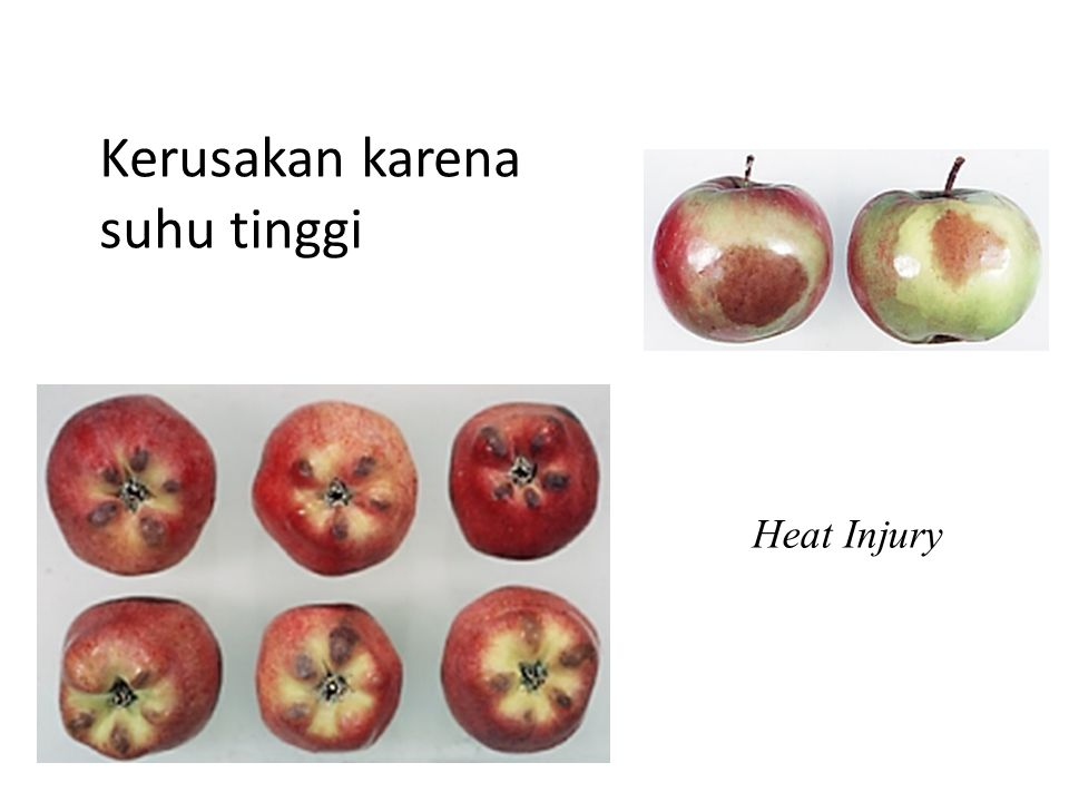 Kerusakan karena suhu tinggi Heat shock (dikenakan temperatur tinggi secara cepat, bukan temperatur lethal), akan memacu pembentukan heat schock protein yang dapat melindungi sel dari stress (tekanan) temperatur baik tinggi maupun rendah.