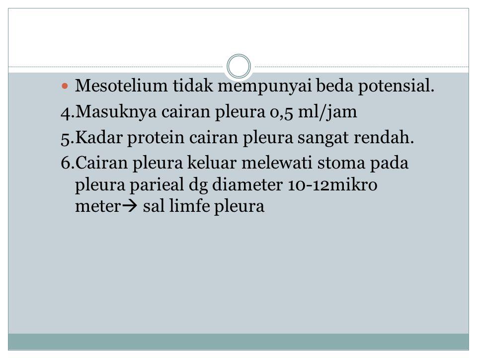 Mesotelium tidak mempunyai beda potensial.