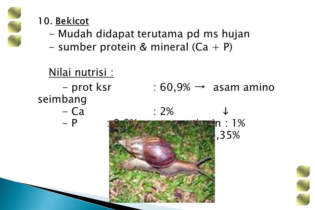 10. Bekicot - Mudah didapat terutama pd ms hujan - sumber protein & mineral (Ca + P) Nilai nutrisi : - prot ksr: 60,9% → asam amino seimbang - Ca: 2%