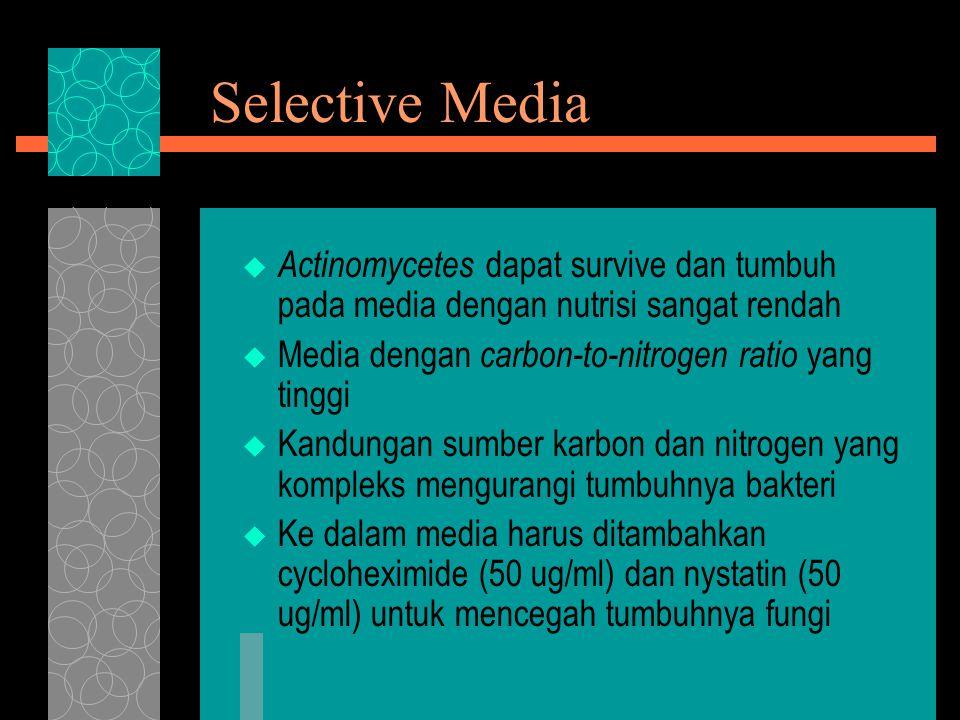 Selective Media  Actinomycetes dapat survive dan tumbuh pada media dengan nutrisi sangat rendah  Media dengan carbon-to-nitrogen ratio yang tinggi 