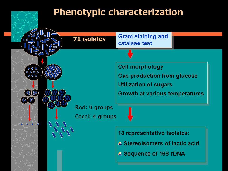 Penapisan/Screening  Seleksi mikroba tertentu  Uji produksi  Uji produktivitas  Seleksi gen  Rekayasa genetik
