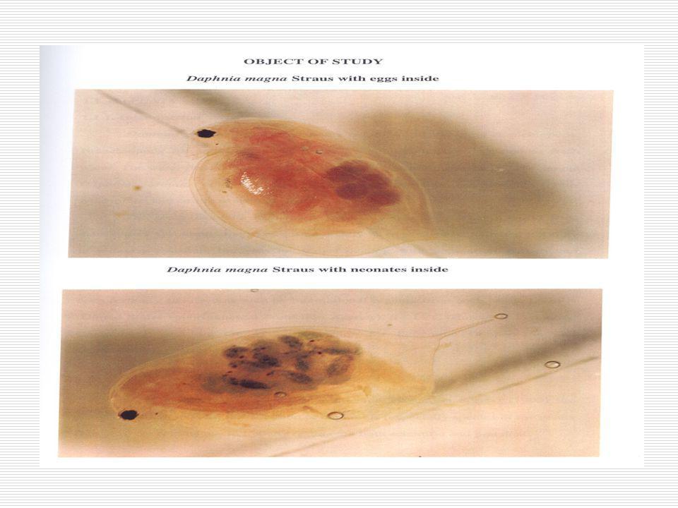 Jenis Organisme Uji  Ikan: ikan mas (Cyprinus carpio), tawes (Puntius javanicus)  Udang/Crustacea: Udang windu (Penaeus monodon)  Diatomae (Skeletonema costartum)  Kerang (Mytilus edulis)  Plankton: Zooplankton (Daphnia carinata) dan Fitoplankton (Selenastrum capricornatum)