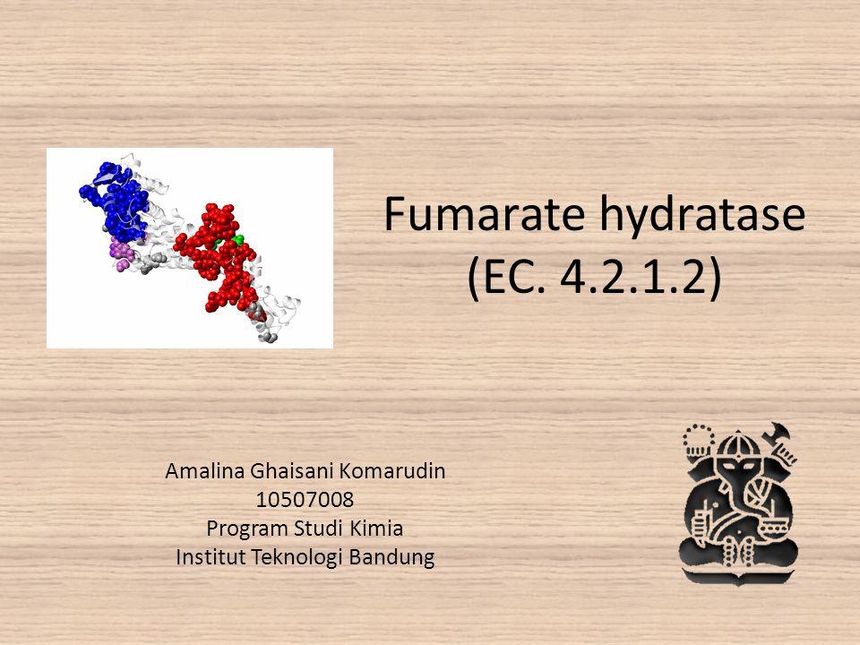 Fumarate hydratase (EC. 4.2.1.2) Amalina Ghaisani Komarudin 10507008 Program Studi Kimia Institut Teknologi Bandung