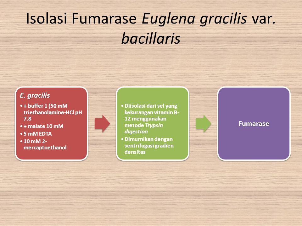 Isolasi Fumarase Euglena gracilis var. bacillaris E. gracilis + buffer 1 (50 mM triethanolamine-HCl pH 7.8 + malate 10 mM 5 mM EDTA 10 mM 2- mercaptoe