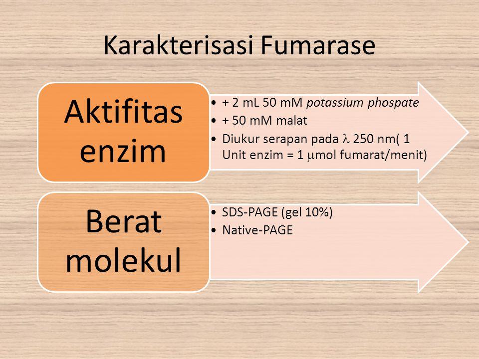 Karakterisasi Fumarase + 2 mL 50 mM potassium phospate + 50 mM malat Diukur serapan pada 250 nm( 1 Unit enzim = 1  mol fumarat/menit) Aktifitas enzim