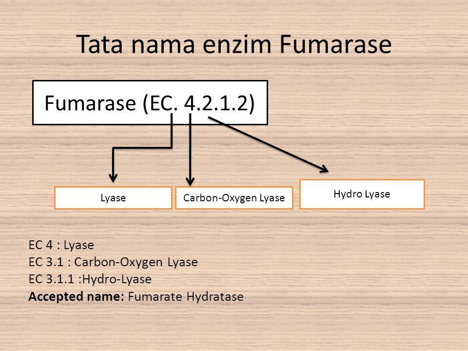 Tata nama enzim Fumarase EC 4 : Lyase EC 3.1 : Carbon-Oxygen Lyase EC 3.1.1 :Hydro-Lyase Accepted name: Fumarate Hydratase Fumarase (EC. 4.2.1.2) Hydr