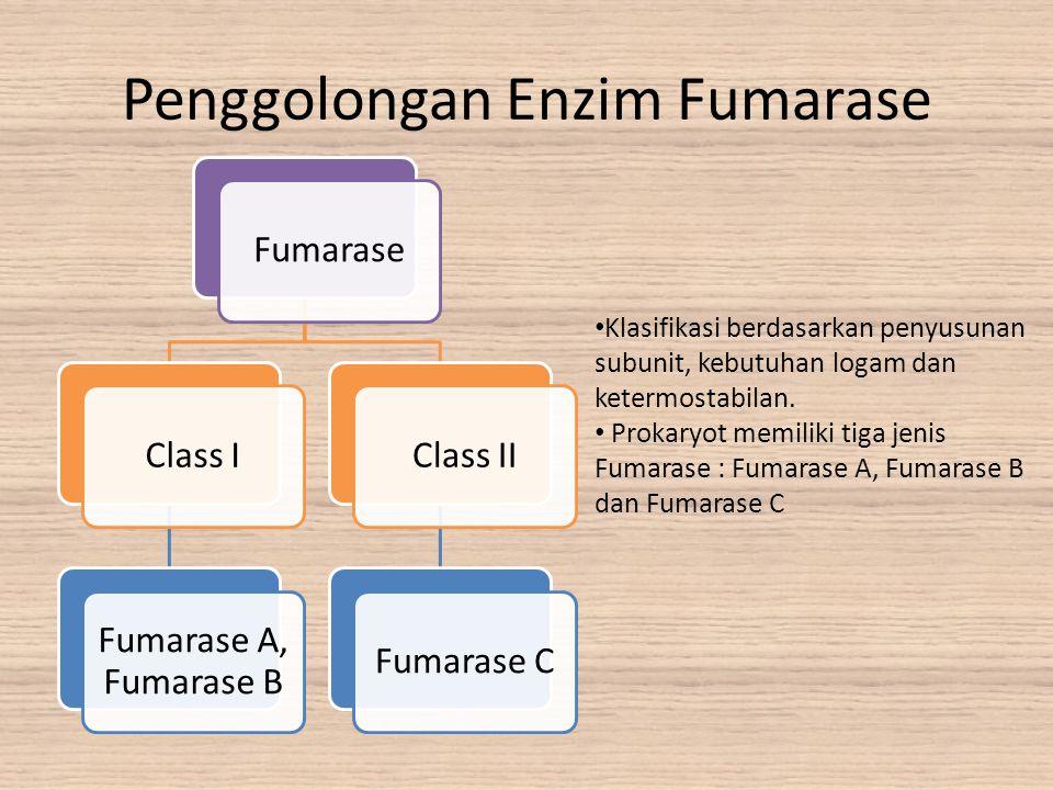 Penggolongan Enzim Fumarase FumaraseClass I Fumarase A, Fumarase B Class IIFumarase C Klasifikasi berdasarkan penyusunan subunit, kebutuhan logam dan