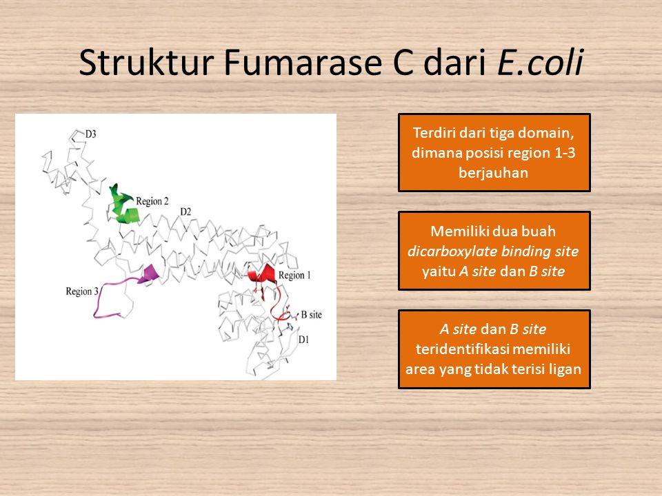 Struktur Fumarase C dari E.coli Terdiri dari tiga domain, dimana posisi region 1-3 berjauhan Memiliki dua buah dicarboxylate binding site yaitu A site