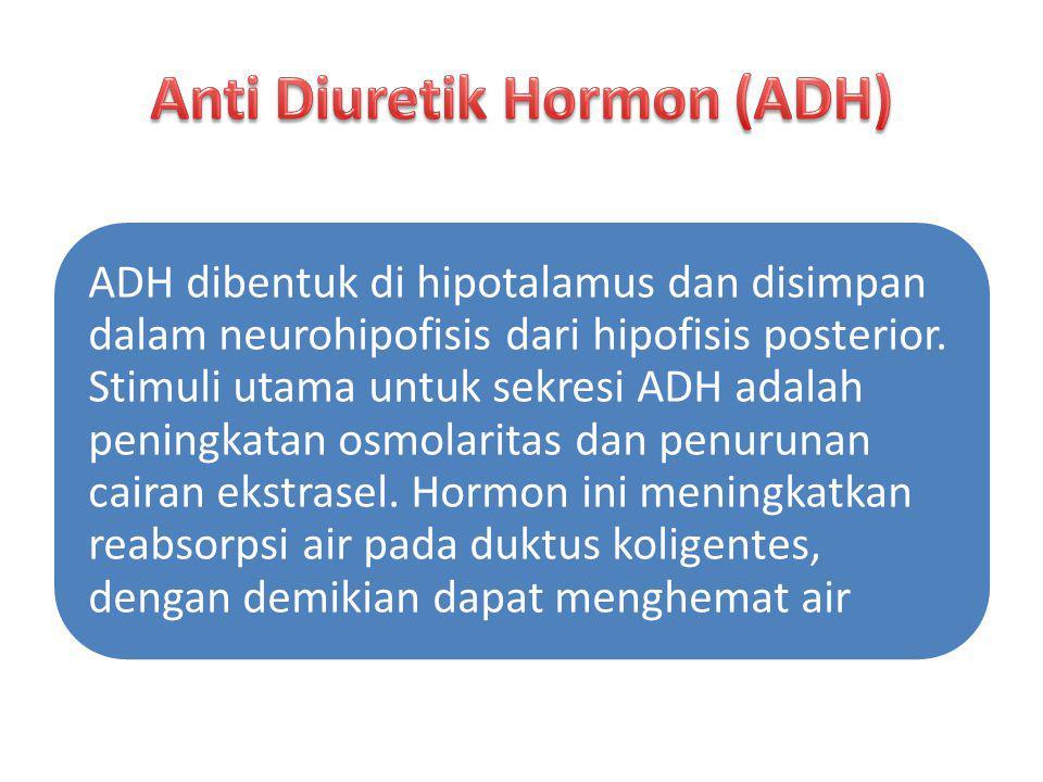 ADH dibentuk di hipotalamus dan disimpan dalam neurohipofisis dari hipofisis posterior. Stimuli utama untuk sekresi ADH adalah peningkatan osmolaritas
