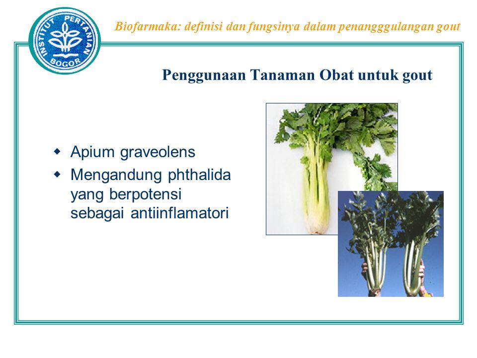 Biofarmaka: definisi dan fungsinya dalam penangggulangan gout Penggunaan Tanaman Obat untuk gout  Apium graveolens  Mengandung phthalida yang berpot