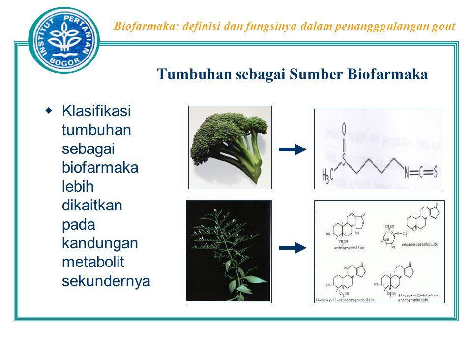 Biofarmaka: definisi dan fungsinya dalam penangggulangan gout Penggunaan Tanaman Obat untuk gout  Curcuma domestica  Mengandung curcumin yang telah dibuktikan memiliki aktivitas antiinflamatori