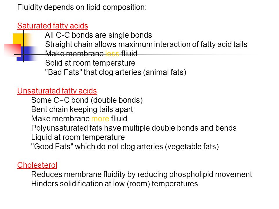 Fluidity depends on lipid composition: Saturated fatty acids All C-C bonds are single bonds Straight chain allows maximum interaction of fatty acid ta