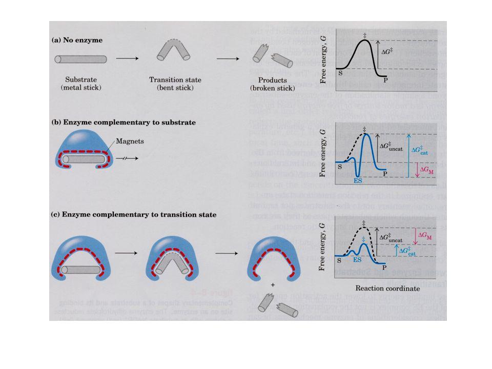 Enzim allosterik Enzim allosterik mengalami perubahan konformasi  sebagai respon terhadap pengikatan modulator efektor Allosterik enzim biasanya lebih komplek dari non allosterik enzim, memiliki sub unit lebih dari satu Memiliki satu atau lebih sisi allosterik / regulator untuk mengikat modulator.