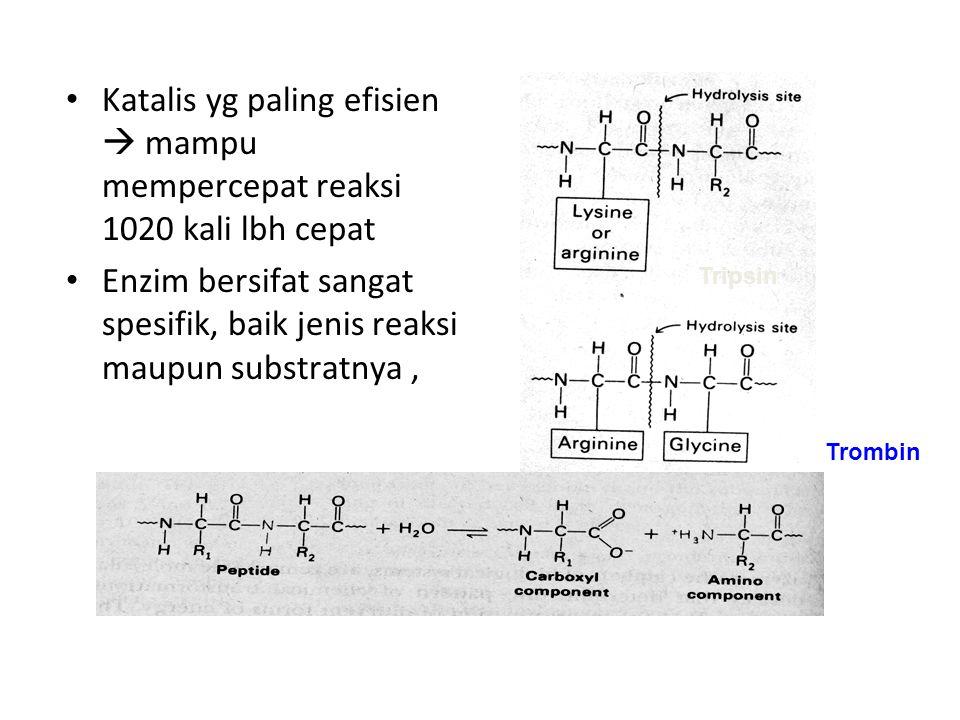 Enzim tidak ikut bereaksi dgn substrat atau produknya Aktifitas dapat dikontrol sesuai dengan kebutuhan organisme itu sendiri Contoh : enzim yg mengkatalisis reaksi pertama pada suatu siklus biosintesis biasanya di hambat oleh produk akhirnya(feedback inhibition) bbrp enzim disintesis dlm btk tidak aktif.