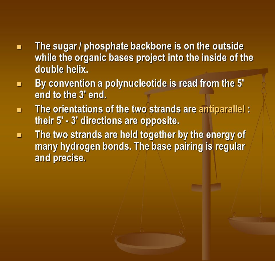 The sugar / phosphate backbone is on the outside while the organic bases project into the inside of the double helix. The sugar / phosphate backbone i