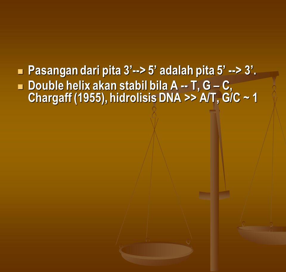 Pasangan dari pita 3'--> 5' adalah pita 5' --> 3'. Pasangan dari pita 3'--> 5' adalah pita 5' --> 3'. Double helix akan stabil bila A -- T, G – C, Cha