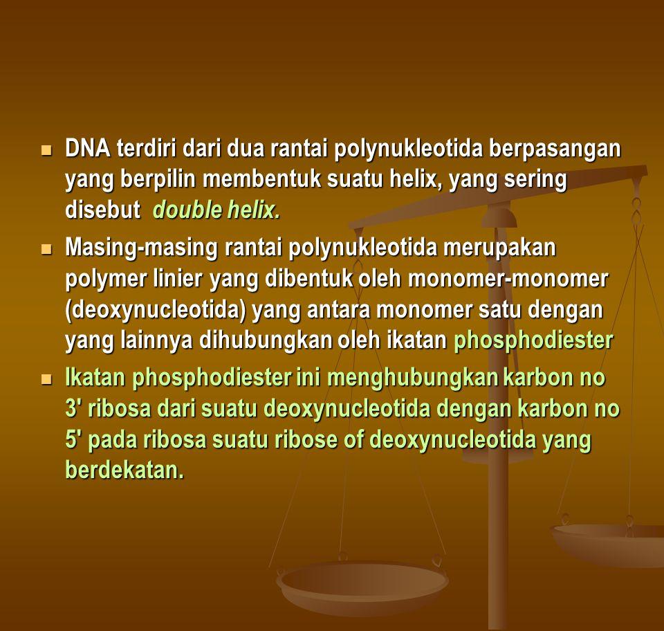 DNA terdiri dari dua rantai polynukleotida berpasangan yang berpilin membentuk suatu helix, yang sering disebut double helix. DNA terdiri dari dua ran
