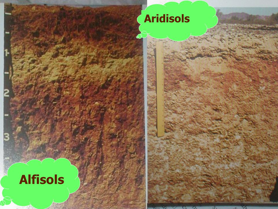 Alfisols Aridisols