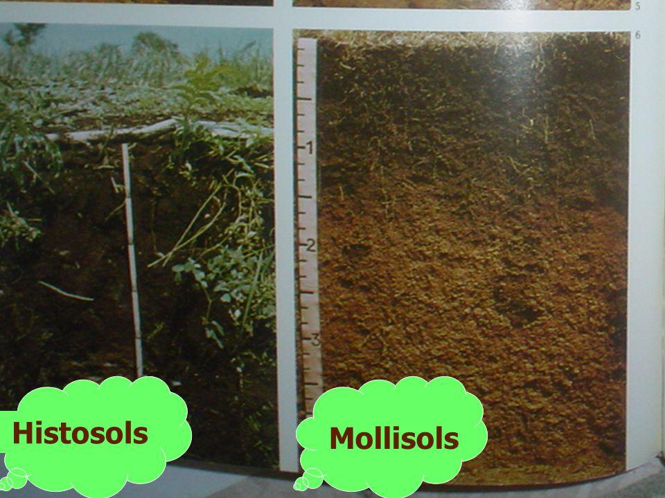 Histosols Mollisols