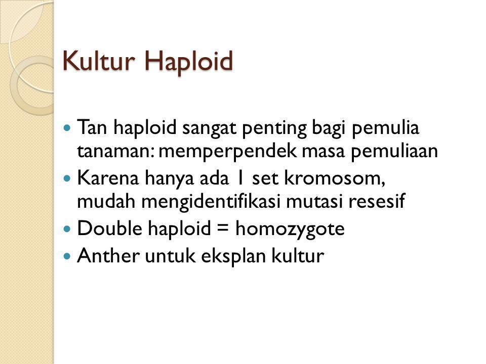 Kultur Haploid Tan haploid sangat penting bagi pemulia tanaman: memperpendek masa pemuliaan Karena hanya ada 1 set kromosom, mudah mengidentifikasi mutasi resesif Double haploid = homozygote Anther untuk eksplan kultur