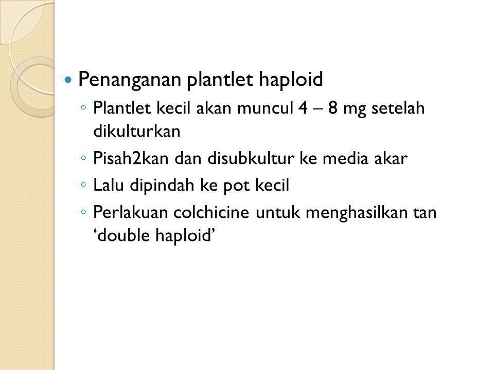 Penanganan plantlet haploid ◦ Plantlet kecil akan muncul 4 – 8 mg setelah dikulturkan ◦ Pisah2kan dan disubkultur ke media akar ◦ Lalu dipindah ke pot