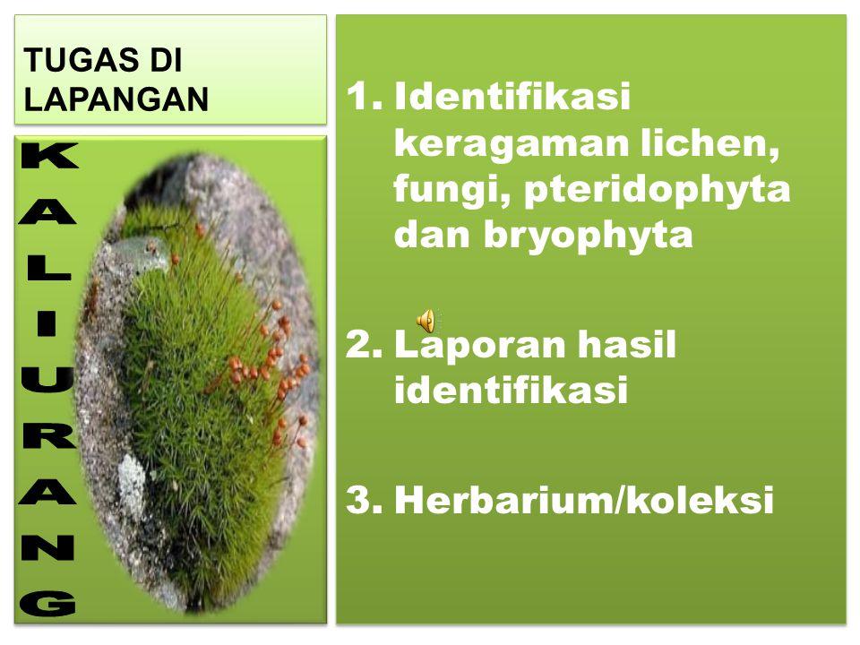 TUGAS DI LAPANGAN 1.Identifikasi keragaman lichen, fungi, pteridophyta dan bryophyta 2.Laporan hasil identifikasi 3.Herbarium/koleksi 1.Identifikasi k