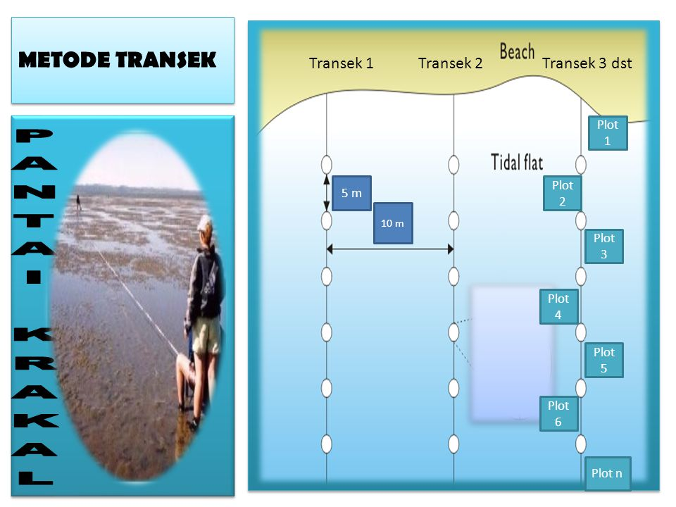 METODE TRANSEK 10 m 5 m Transek 1Transek 2Transek 3 dst Plot 1 Plot 4 Plot 3 Plot 2 Plot 6 Plot n Plot 5